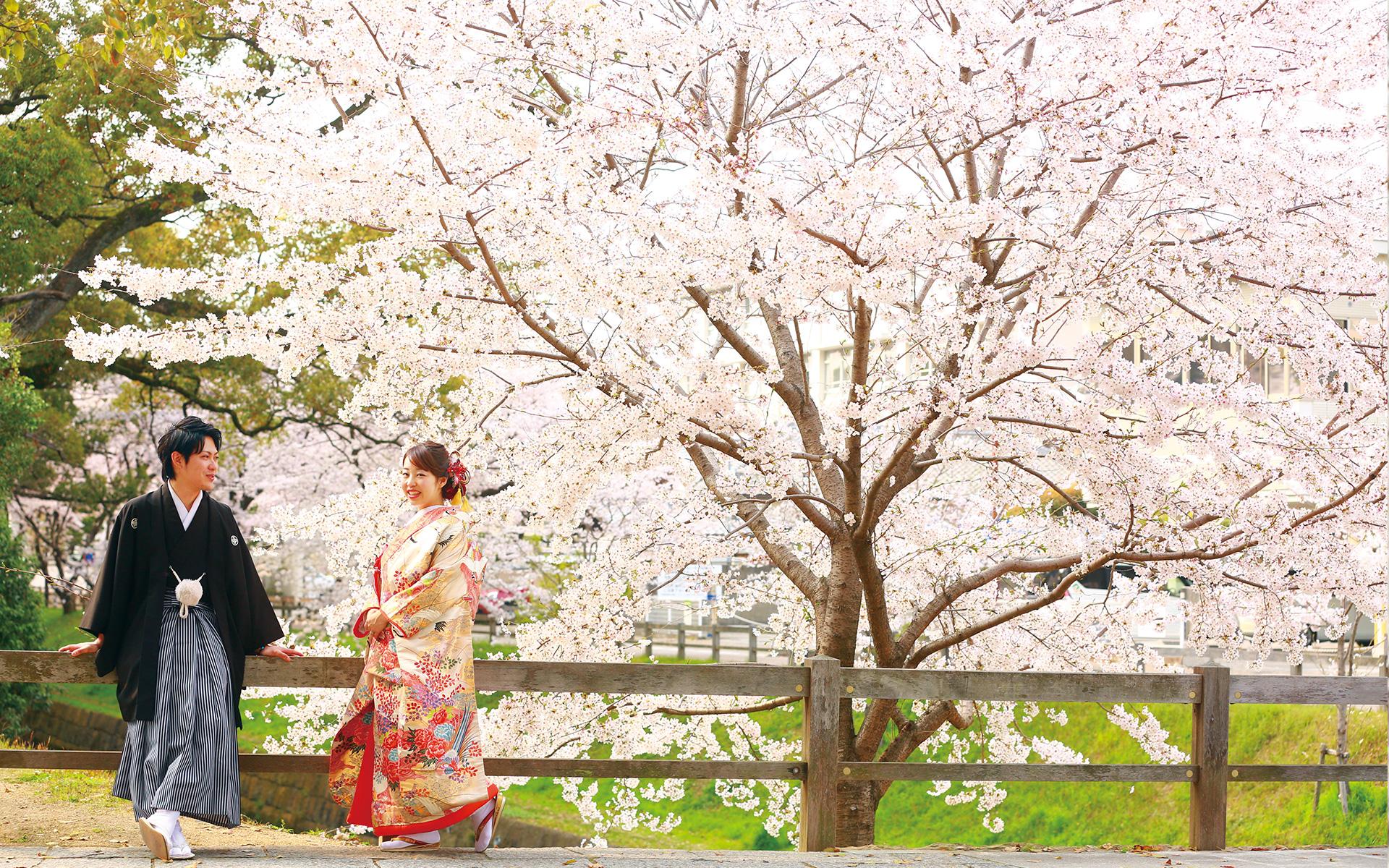 桜ロケーション撮影プラン